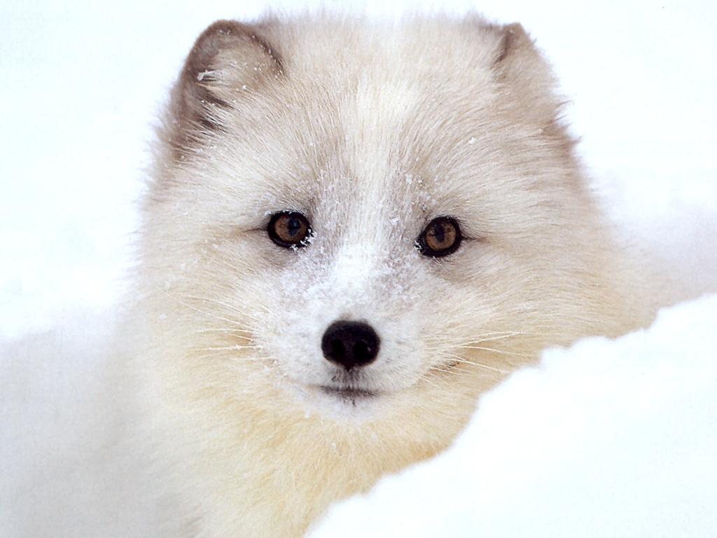 http://2.bp.blogspot.com/-VIQhhLXfBWM/T2rZxAfq3sI/AAAAAAAACz8/fIL0TrBJ0nA/s1600/fox+1.jpg