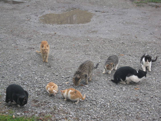 Feral Cats On Long Island