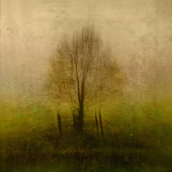 "Solo Tree © Paul ""Skip"" Brown"