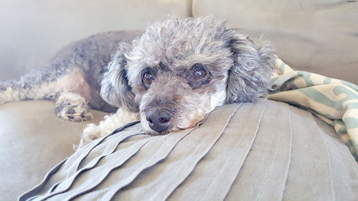 """Check out how you can get """"answers"""" from your pooch and find out all the details on how a Doggy DNA test could save your pup's life!"""