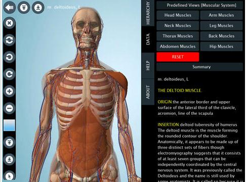 Visual body 3d anatomy