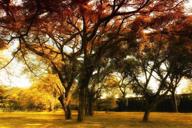 Pohon Pohon Yang Sudah Tua Dan Beberapa Pohon Langka