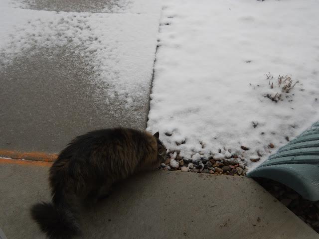 #Snowpocalypse2