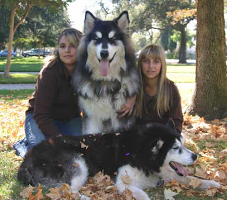 Alaskan Malamute and Women