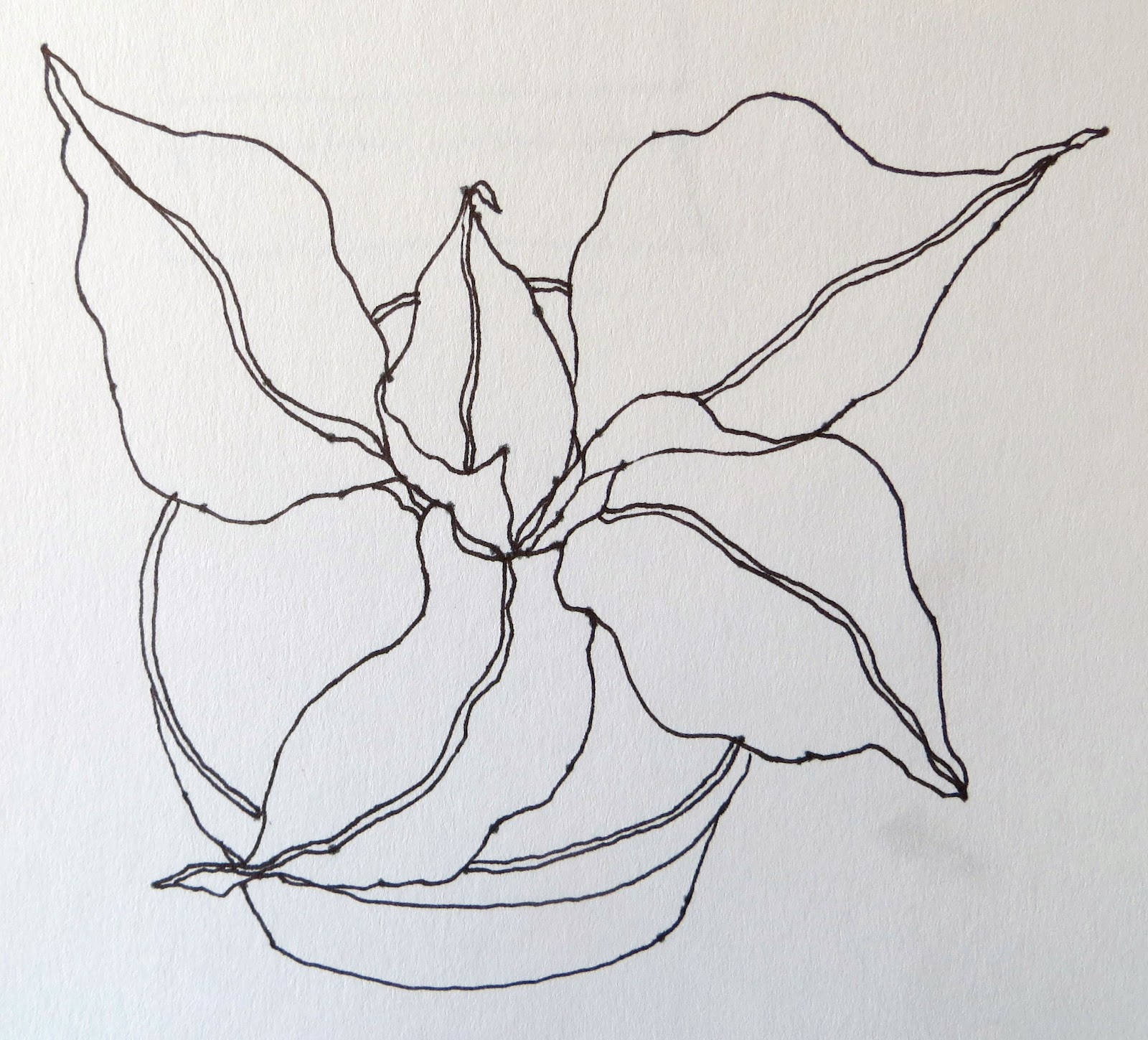 Contour Line Drawing Plant : The painted prism sketchbook assignment trees leaves