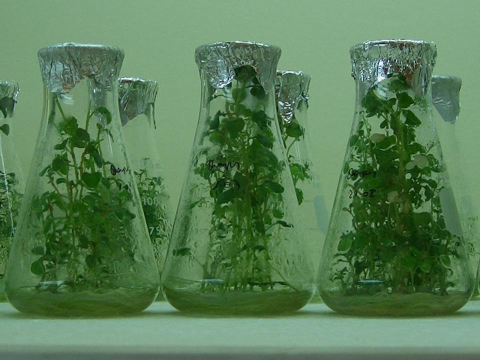los nuevos instrumentos de la biologia molecular y los cultivos de