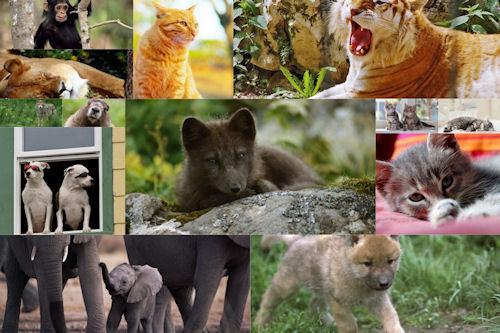 Fotografías de animales tiernos y salvajes I (14 fotos)