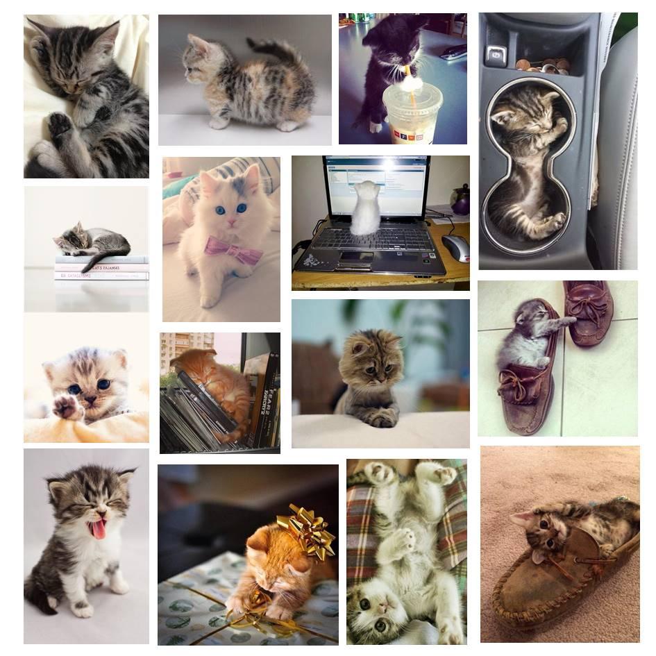 Cosas que molan un montón gatitos