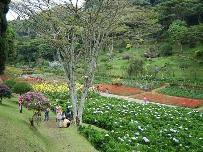 Pemandangan Taman Bunga yang Indah di Selecta Kota Batu:Blog Bunga