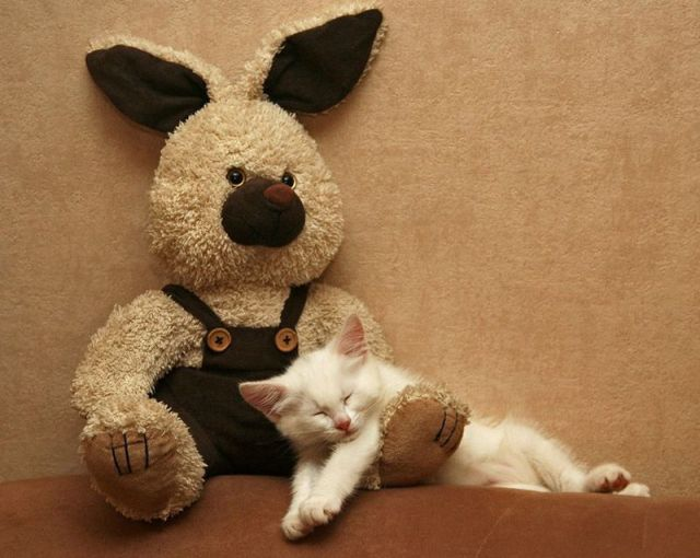 Funny cat pictures part 14, sleeping with bear