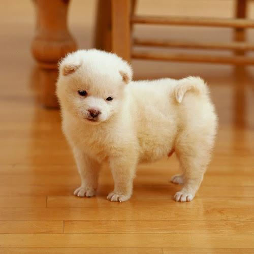 Koleksi Foto Anjing Cute