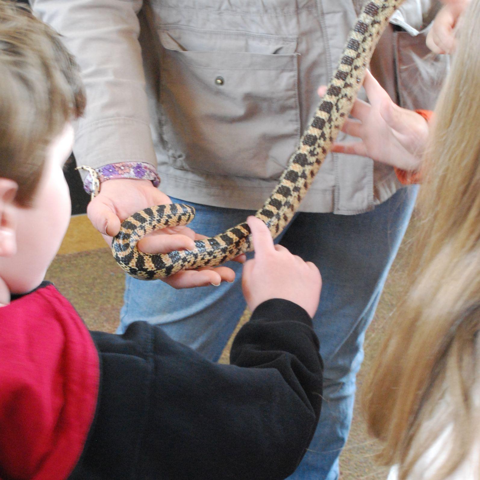 http://2.bp.blogspot.com/-VKAMInFkpFk/TdFf4w9QdXI/AAAAAAAAIVE/rzDKJ2KfjC4/s1600/ogden_nature_snake.jpg