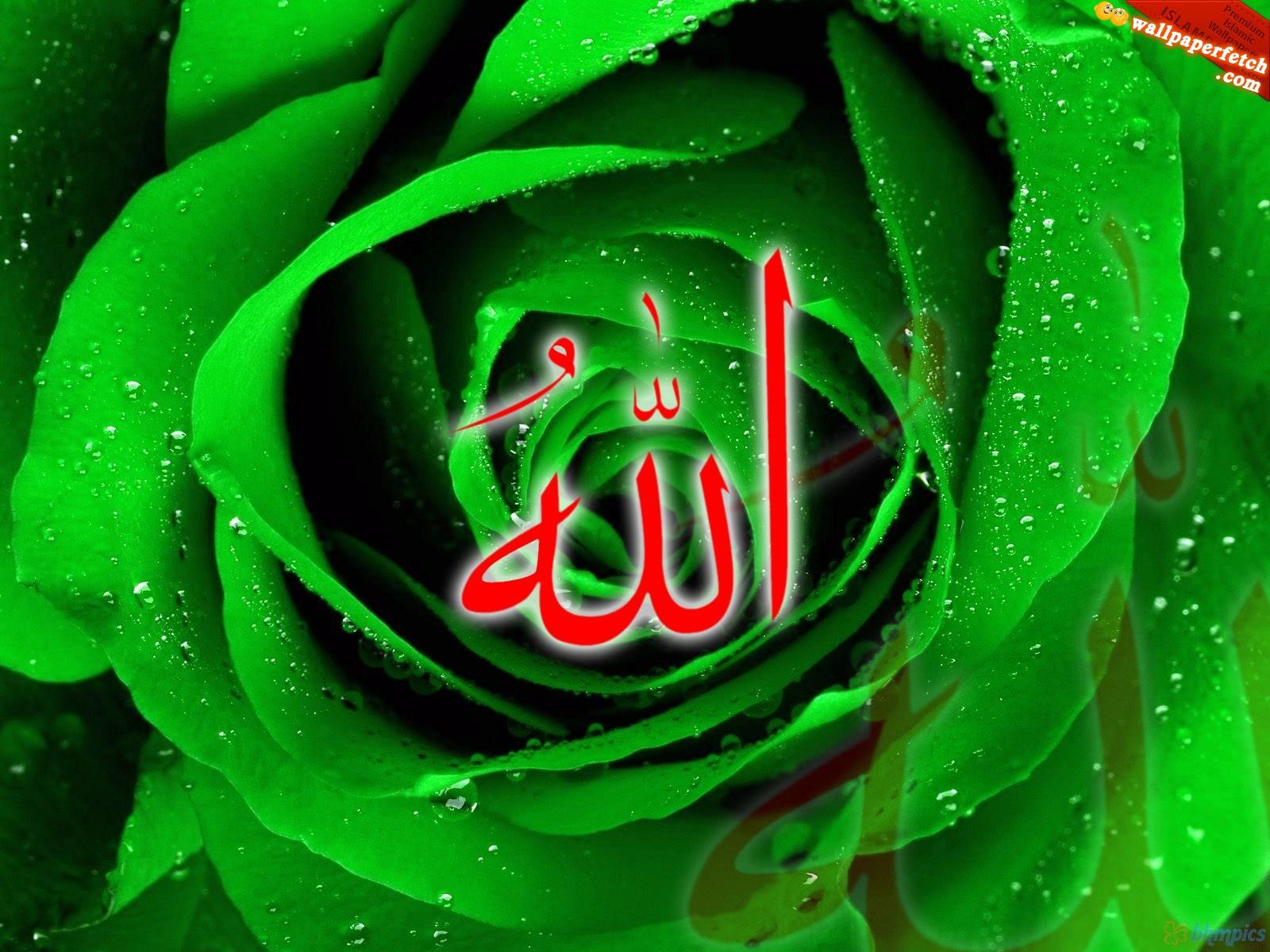 http://2.bp.blogspot.com/-VKIsRcoaGGs/T8pn3tGMh2I/AAAAAAAAPTw/4WZgoFg0Pb0/s1600/red-allah-wallpaper-amazing-green-rose.JPG
