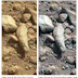 Mars : NASA Curiosity Photographed Fossil Finger On Mars ?