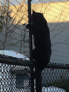 cat climbing fence