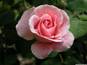 Que hermoso cuando un jardín tiene una gran variedad de rosas y todas muy . rosas