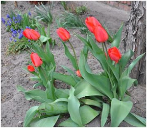 Wiosna w naszych ogrodach