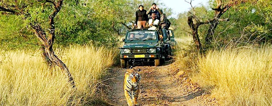 Online Jeep Safari Booking - Ranthambore Jeep Safari Booking