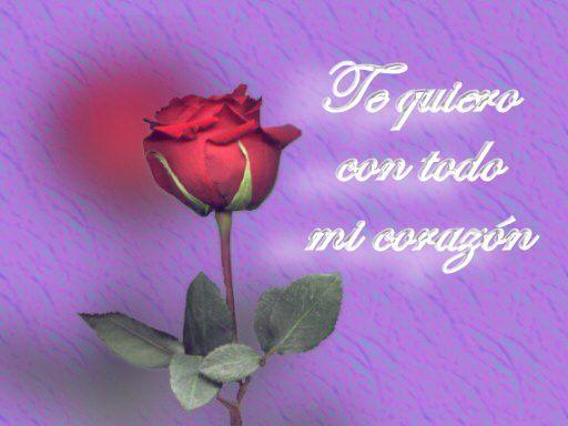 imagenes de te quiero en una rosa