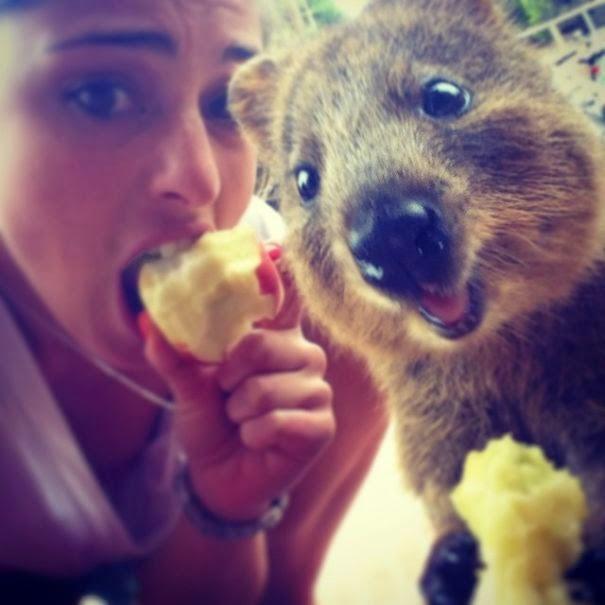 quokka selfie trend australia-2