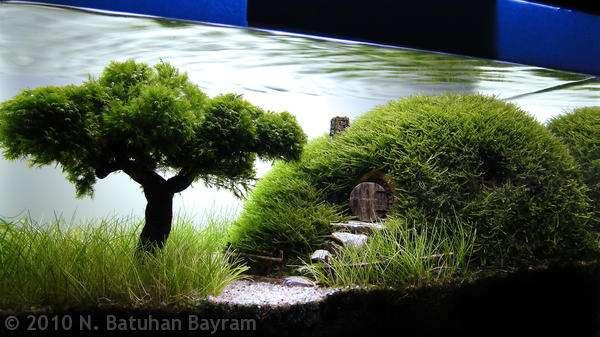 яванский мох aquascaping