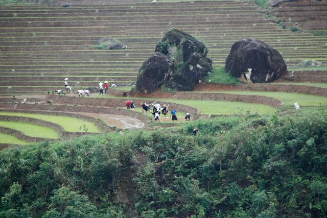 Terrazas de arroz 20km antes de Sapa.