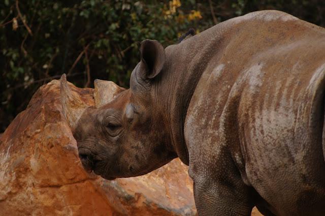 rhino photo free