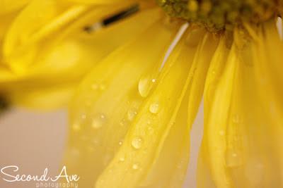 flower, macro, martini, mixology, Food Photography, project 52, photoblo, Virginia photographer, blog hop, Food photographer, macro photography,