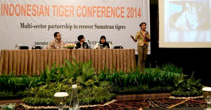 Indonesian Tiger Coherence