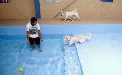 2 chú chó đang được nhân viên của khu resort chăm sóc và chơi đùa cùng.