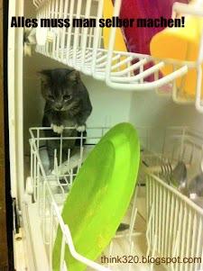 Katze: Alles muss man selber machen!