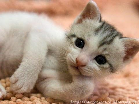 顎に手を添える赤ちゃん猫