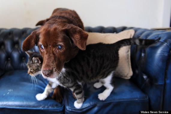 Relação de amizade entre uma gata e um cachorro cego