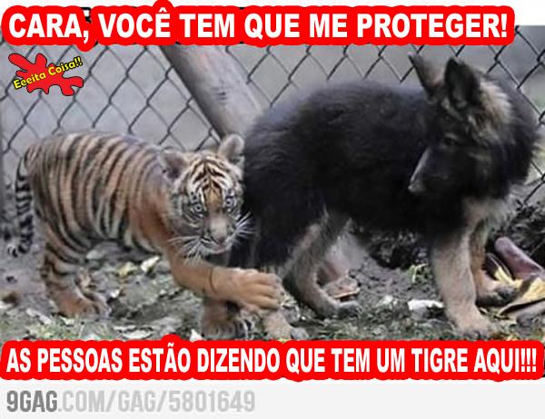 tigre, cachorro, zoo, eeeita coisa