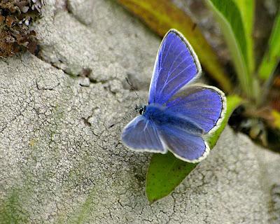 http://2.bp.blogspot.com/-VOHNvQ7E28A/Tlv2_5HtqYI/AAAAAAAAAf4/s6tv1kM_tn4/s400/Blue_butterfly_-_digital_computer_wallpaper.jpg
