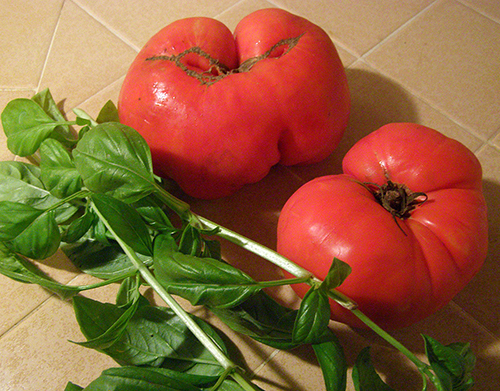 Two One Lb. Tomatoes with Basil Stalks