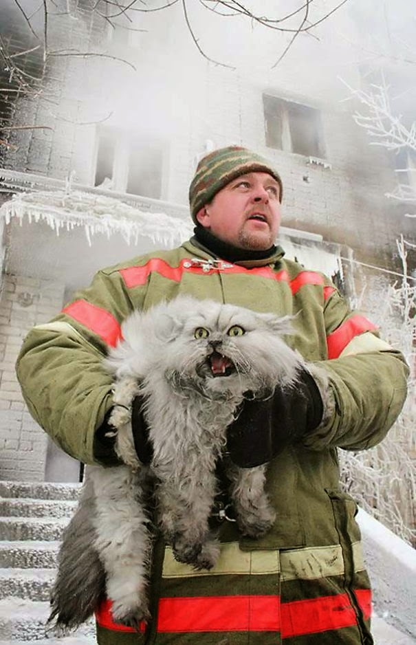 20+ Photos That Will Restore Your Faith In Humanity - Russian Firefighter Saving A Cat