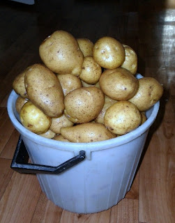 20 февраля, картофель Адретта