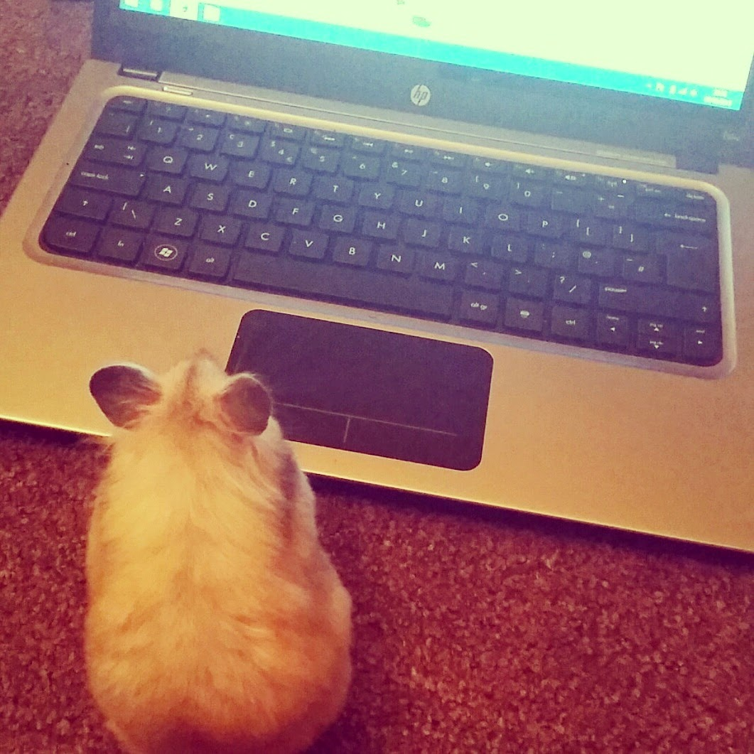 blogger-hamster-using-laptop