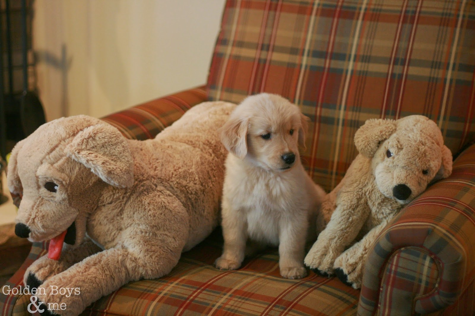 Ikea Dog Breed