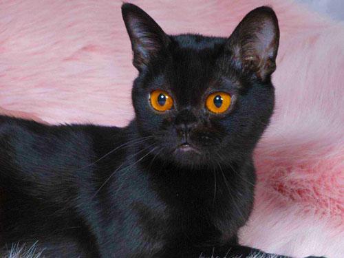 Cat Eye Wl