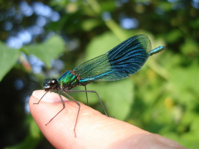how to catch nidoran male in leaf green