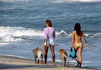 Está certo isso cães nas praias sujando tudo ?