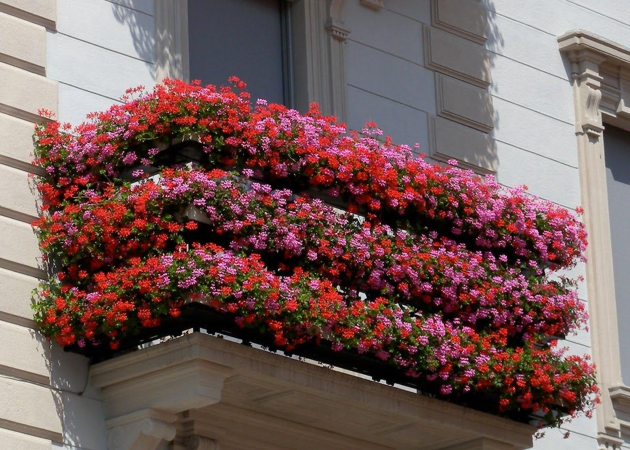 Solo caserta eventi e sagre concorso balconi fioriti a for Solo piante