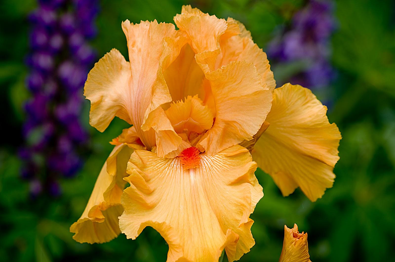 Schreiner 39 S Iris Gardens Four Thom R Open Salon