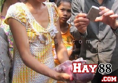 Đổ xô đi xem lợn giống trẻ sơ sinh ở Bình Phước