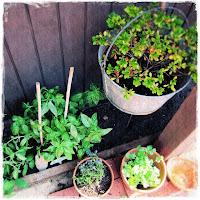 permaculture corner in my garden