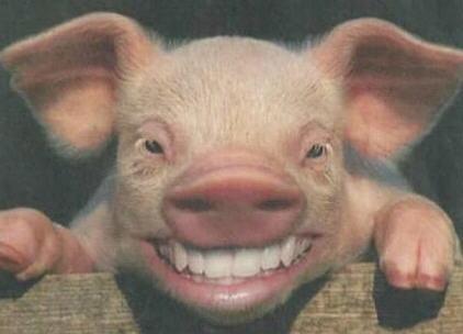 kunnen varkens bruin worden in de zon
