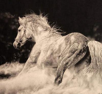 caballo-oleo