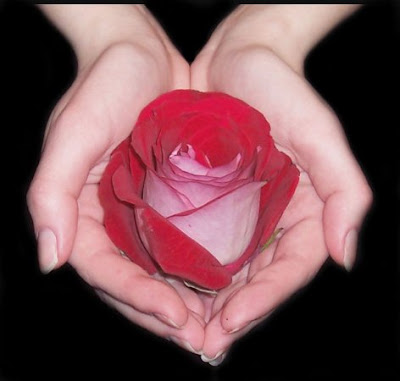rosa-en-manos